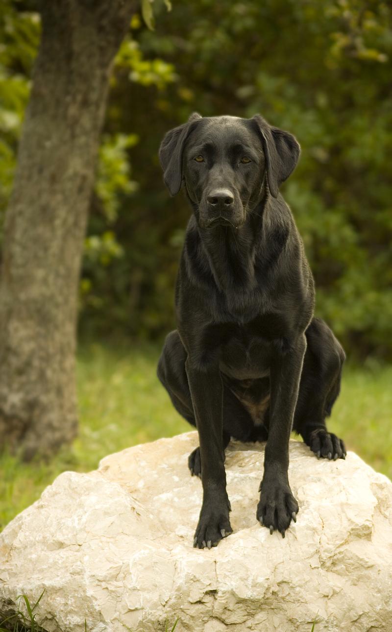 Zoé kutya