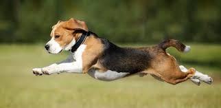 Munka- és Sport kutyatápok
