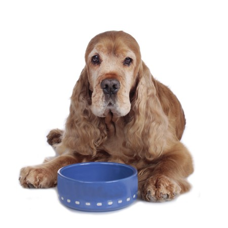 Senior hipoallergén kutyatápok